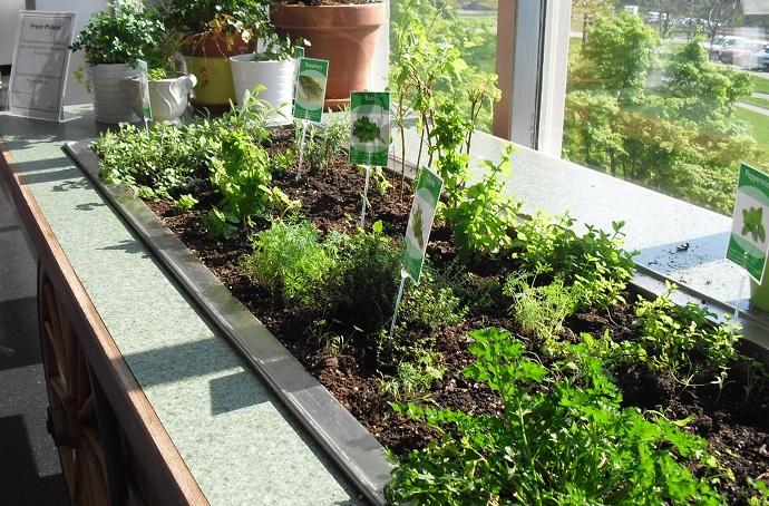 RS5184_salad bar herbs
